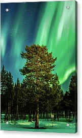 Majestic Tree Under The Northern Lights Karasjok Norway Acrylic Print