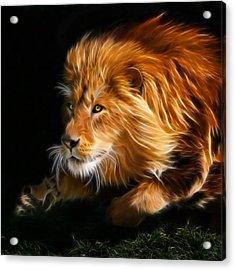 Male Lion Fractal Acrylic Print by Julie L Hoddinott