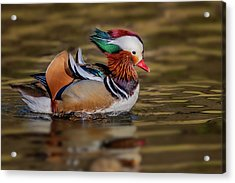 Acrylic Print featuring the photograph Mandarin Duck  by Susan Candelario