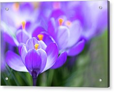 Acrylic Print featuring the photograph Marching Into Spring by Rebecca Cozart