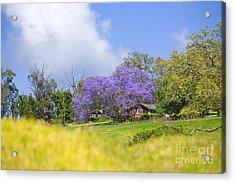 Maui Upcountry Acrylic Print by Ron Dahlquist - Printscapes