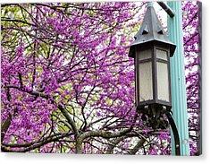Michigan State University Spring 7 Acrylic Print by John McGraw