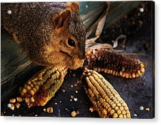 Miss Messy Acrylic Print by Kathleen Stephens