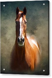 Misty In The Moonlight P D P Acrylic Print