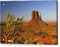 Mitten And Juniper Acrylic Print by Winston Rockwell