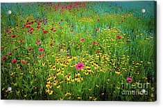 Acrylic Print featuring the photograph Mixed Wildflowers In Bloom by D Davila