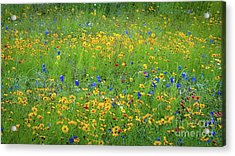 Acrylic Print featuring the photograph Mixed Wildflowers In Texas 538 by D Davila