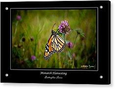 Monarch Harvesting Acrylic Print by Mathias Rousseau