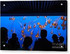 Monterey Bay Aquarium Acrylic Print by Jason O Watson