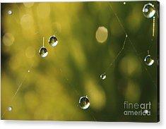 Morning Dew 3 Acrylic Print