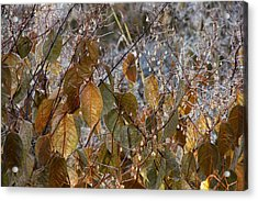 Morning Frozen Acrylic Print by JAMART Photography
