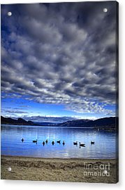 Morning Light On Okanagan Lake Acrylic Print by Tara Turner