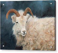 Mountain Goat Acrylic Print