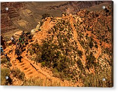 Acrylic Print featuring the photograph Mule Train In Grand Canyon by Claudia Abbott