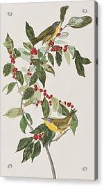 Nashville Warbler Acrylic Print by John James Audubon