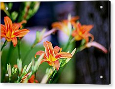 Nature 1 Acrylic Print by Paul SEQUENCE Ferguson             sequence dot net