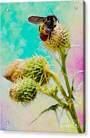 Collection Without Distructions Acrylic Print by Manjot Singh Sachdeva
