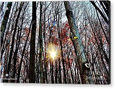 Nature Acrylic Print by MaryLee Parker