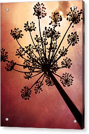 Nature's Fireworks Acrylic Print by Amy Tyler
