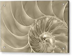 Acrylic Print featuring the photograph Nautilus Shell by John Hix