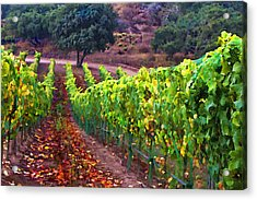 Nearly Harvest Acrylic Print by Patricia Stalter
