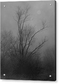 Nebelbild 13 - Fog Image 13 Acrylic Print by Mimulux patricia no No