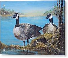 Nesting At Millsboro Pond Acrylic Print