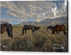 Nevada Acrylic Print by Glenn Vidal