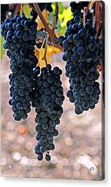 New Grapes Acrylic Print