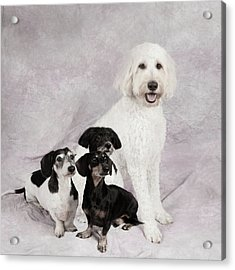 Fur Friends Acrylic Print by Erika Weber
