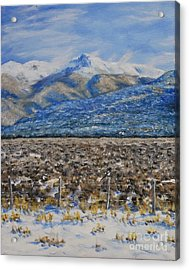 North Of Taos Acrylic Print by Stanton Allaben