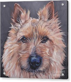 Acrylic Print featuring the painting Norwich Terrier by Lee Ann Shepard