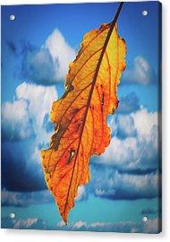 October Leaf B Fine Art Acrylic Print