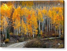 Off The Beaten Path Acrylic Print by Tim Reaves
