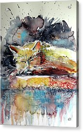 Old Cat Resting Acrylic Print by Kovacs Anna Brigitta