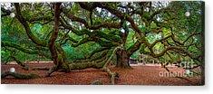 Old Southern Live Oak Acrylic Print