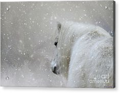 Acrylic Print featuring the photograph On A Cold Winter Day by Eva Lechner