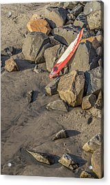 Acrylic Print featuring the photograph On The Rocks by Peter Tellone