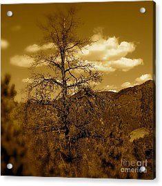 On To Pike's Peak Acrylic Print by Sergio Geraldes