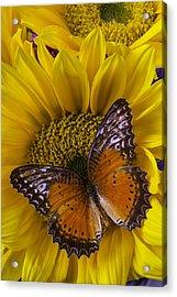Orange Butterfly On Sunflower Acrylic Print