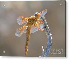 Dragonfly 5 Acrylic Print