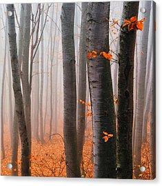 Orange Wood Acrylic Print