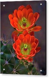 Acrylic Print featuring the photograph Orange Ya Beautiful  by Saija Lehtonen