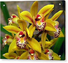 Orchid 9 Acrylic Print