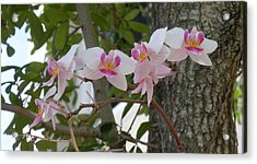 Orchid Bunch Acrylic Print by Maria Bonnier-Perez