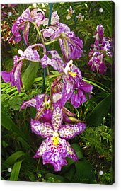 Acrylic Print featuring the photograph Orchids - Purple Polka Dots by Kerri Ligatich