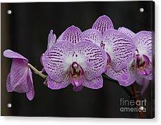Orchids On Black Acrylic Print