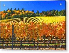 Oregon Wine Country Acrylic Print by Margaret Hood