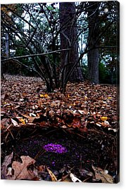 Organize Purple Berries Acrylic Print by Lizzie  Johnson