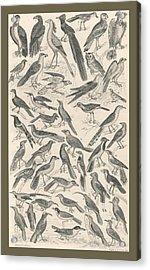 Ornithology Acrylic Print